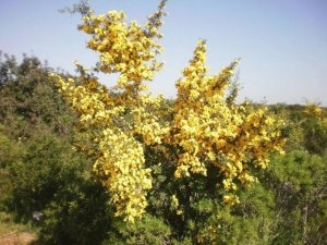 bosco lupomonaco veglie - sic - foto C. Casili
