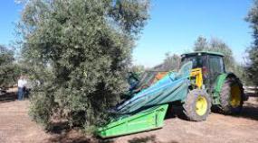 raccolta-meccanizzata-olive