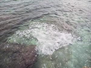 chiazza bianca san foca