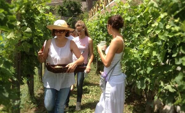 Wine Tour in Costiera Amalfitana