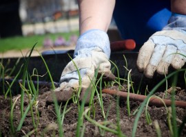 IncrEdible EducationSalford switch to peat free compost