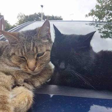 Cats snuggled up on car outside. Image credit: Caitlin Gray