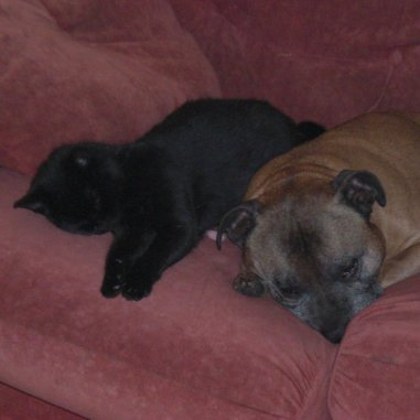 Cat and dog sleeping on the sofa. Image credit: Beckie Bold