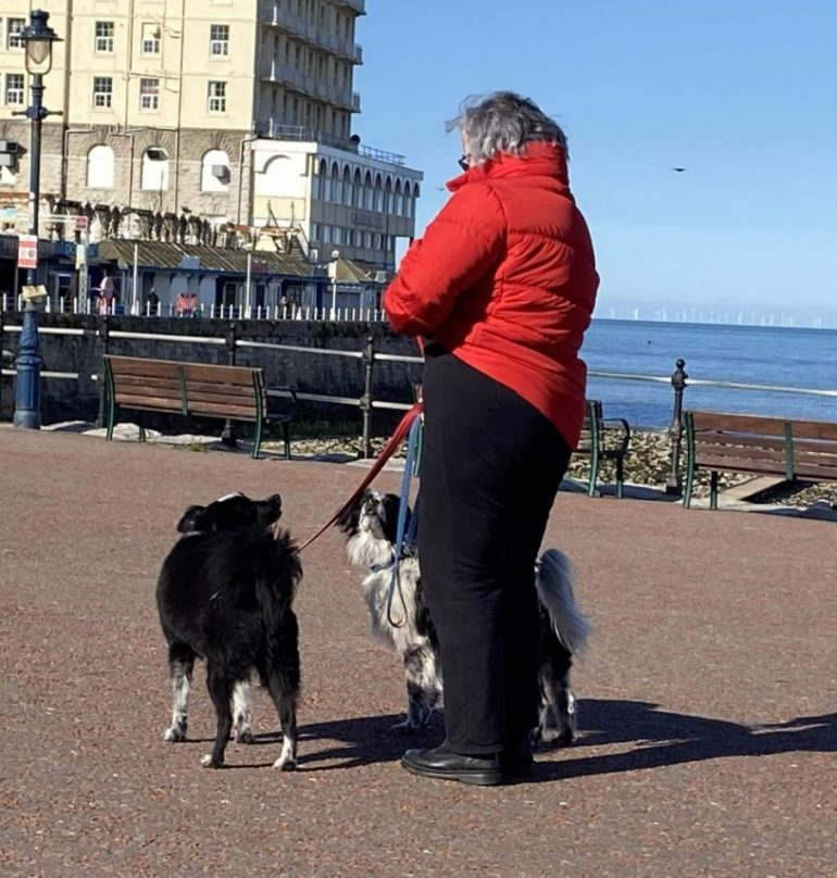 Dogs adapt to new routine