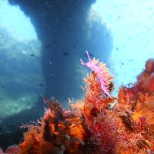 Dive sites in Menorca. Visit the best sites with S'Algar Diving