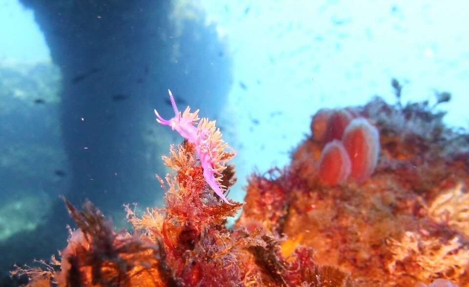 Discover the best dive sites with S'Algar Diving, Menorca