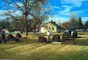 Cutting Sod for Veteran's Memorial