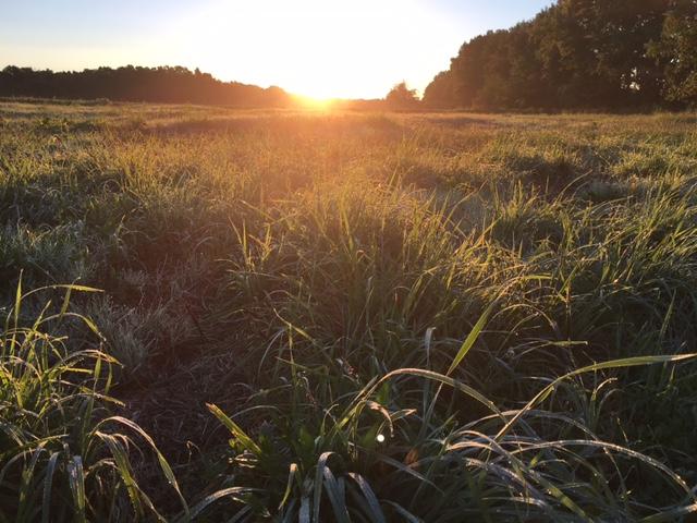 sunrise dew summer 2016