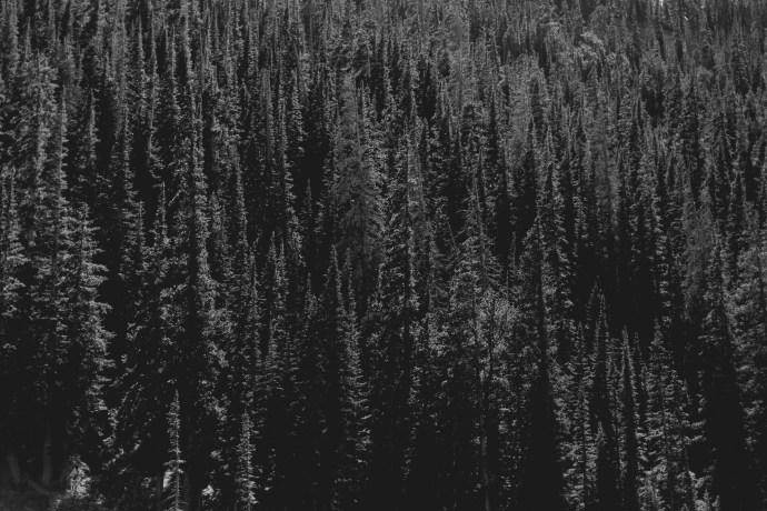 rocky-mountain-engagement-photos-55
