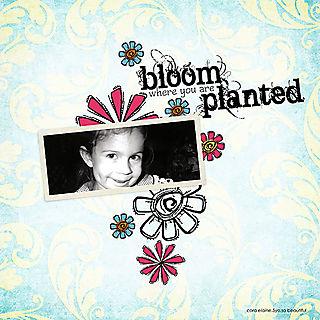 Bloomcora