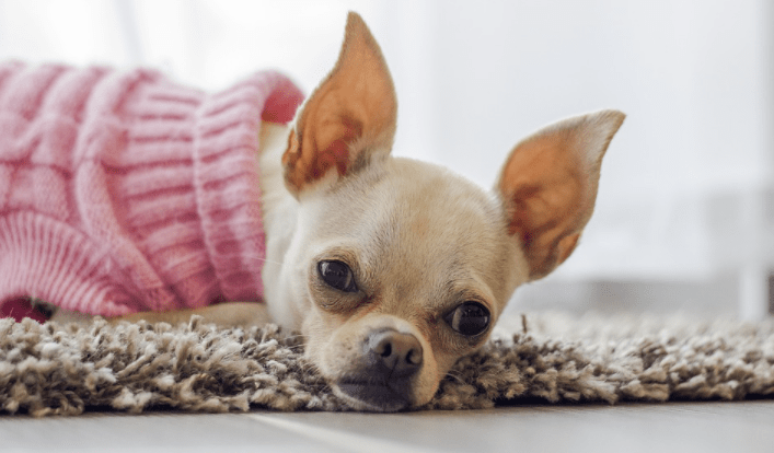 Best Birthday Gift Ideas for Your Dog
