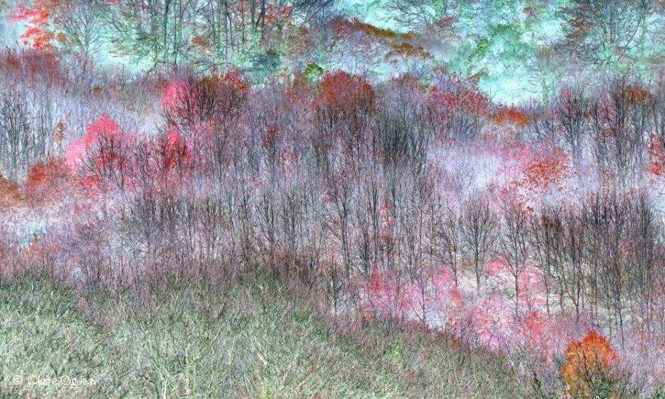 Magical Trees - awarded 1st place in Abstract Views category of IGPOTY14