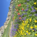 FREE Wasatch Wildflower Festival Hikes