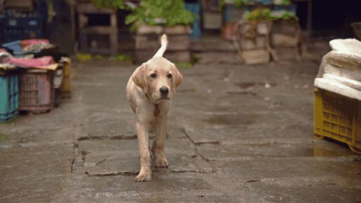 charlie movie lab dog