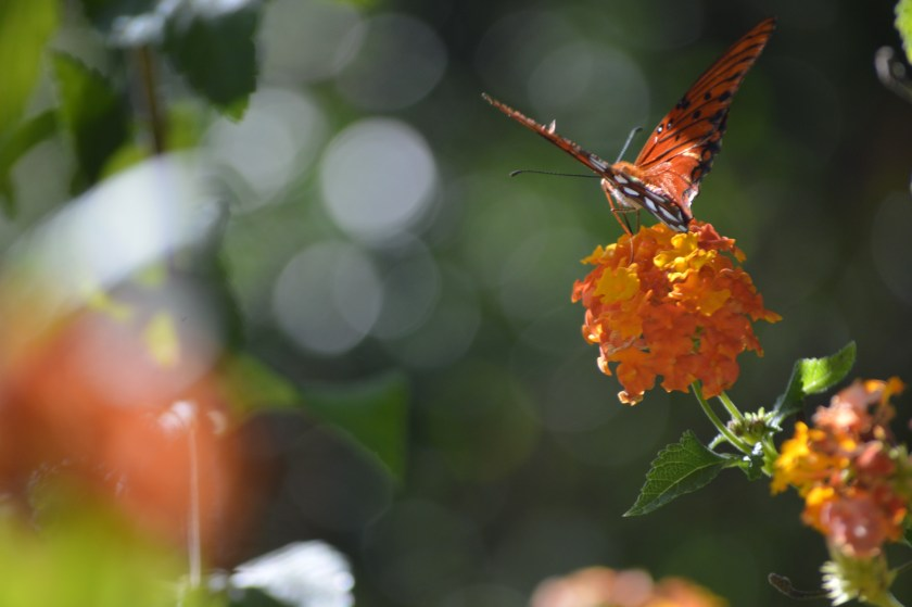 Photo of butterfly with heavy bokeh