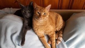 Tristan and Tigger