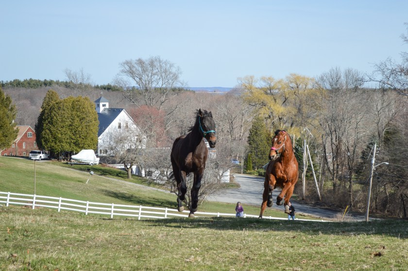 Prestige Stables, Skippy and Striker