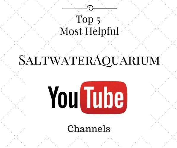 Top 5 Most Helpful Saltwater Aquarium You Tube Channels