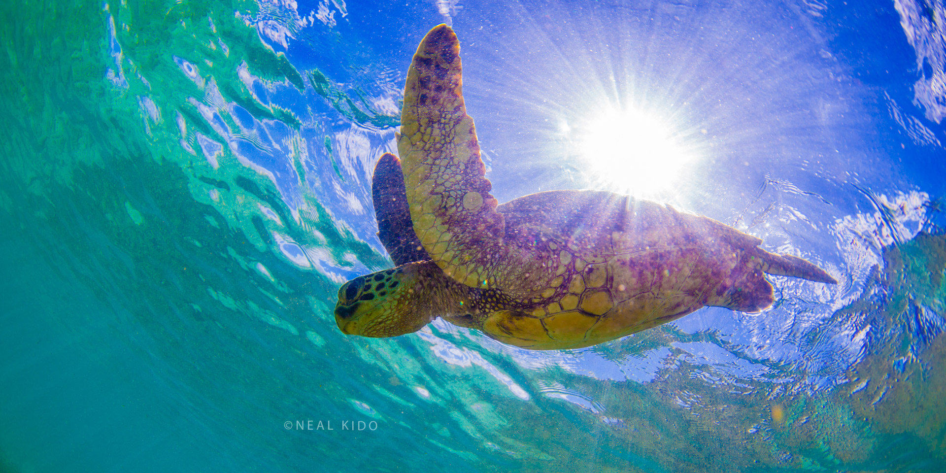 Honu's World
