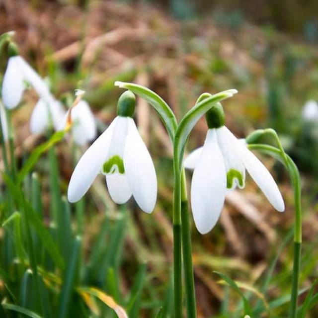 Springs nearly here! lovecornwall spring flowers