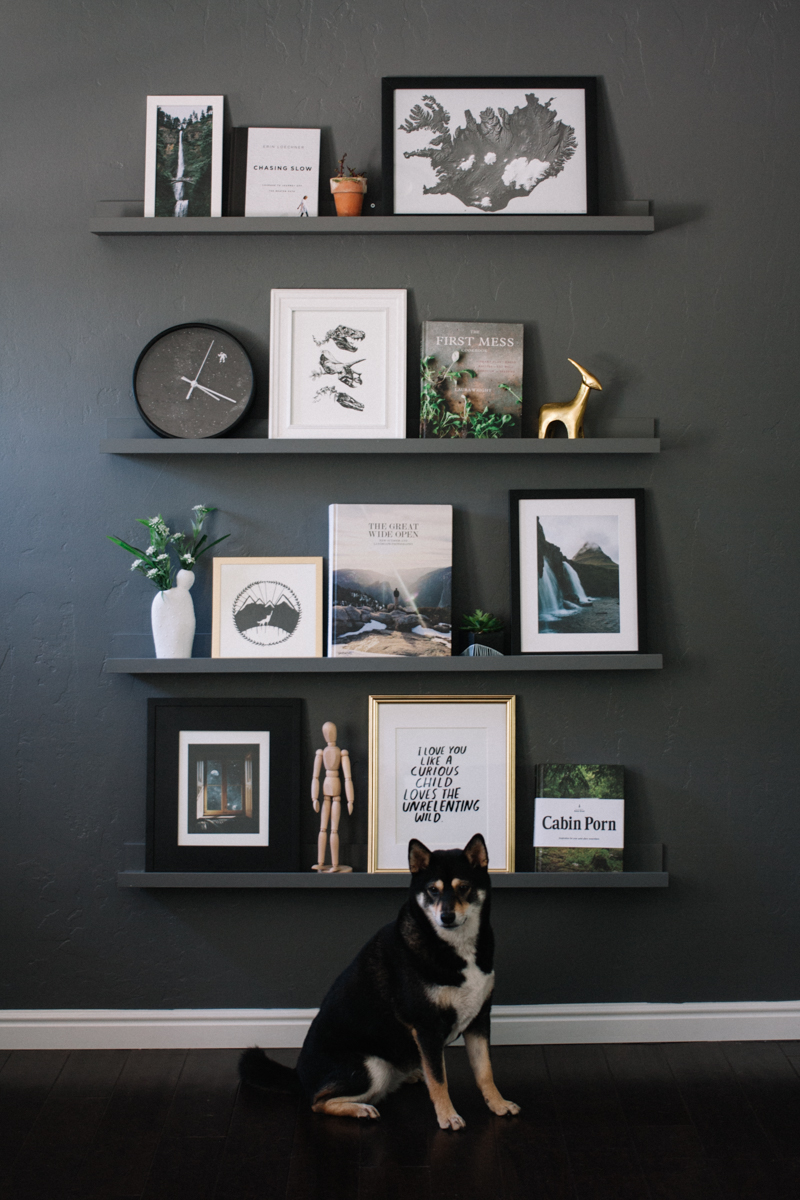 Black dog sitting in front of a dusty black wall with 4 shelves with an assortment of prints, vases, figurines, and other objects resting on them