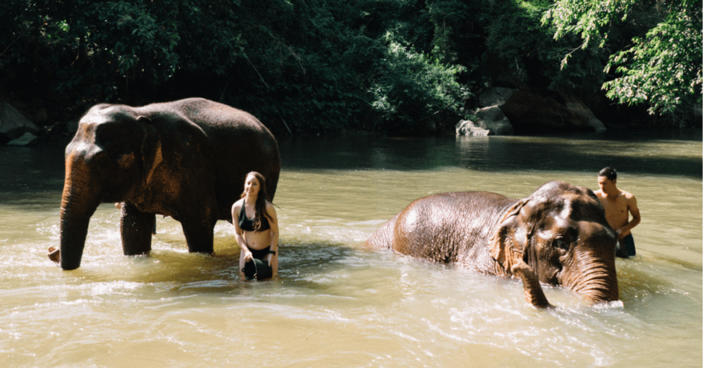 Seeing elephants in Thailand ethically | Asia travel | Animal tourism | saltyspaces.com
