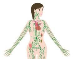 El sistema linfático: Qué es y funciones. La linfa y los ganglios