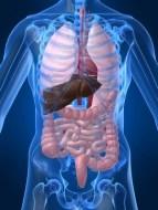 Enfermedad del Hígado: Calambres, gases y otros Síntomas Problemas en el Hígado