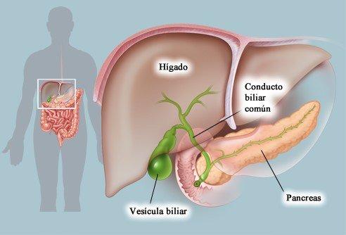 Resultado de imagen de vesicula biliar