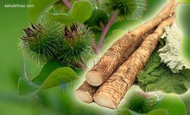raiz de bardana para que sirve y sus propiedades medicinales
