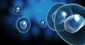 El país aún no aprueba la investigación sobre células madre