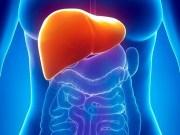 Un sistema de perfusión permite preservar hígados humanos fuera del organismo