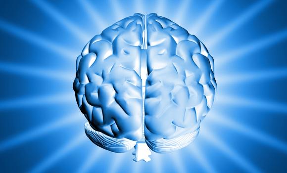 Alimentos que van directos a su cerebro
