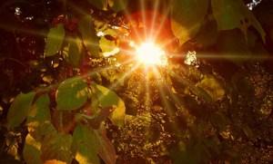 Necesita vitamina D: aproveche estos últimos rayos de sol