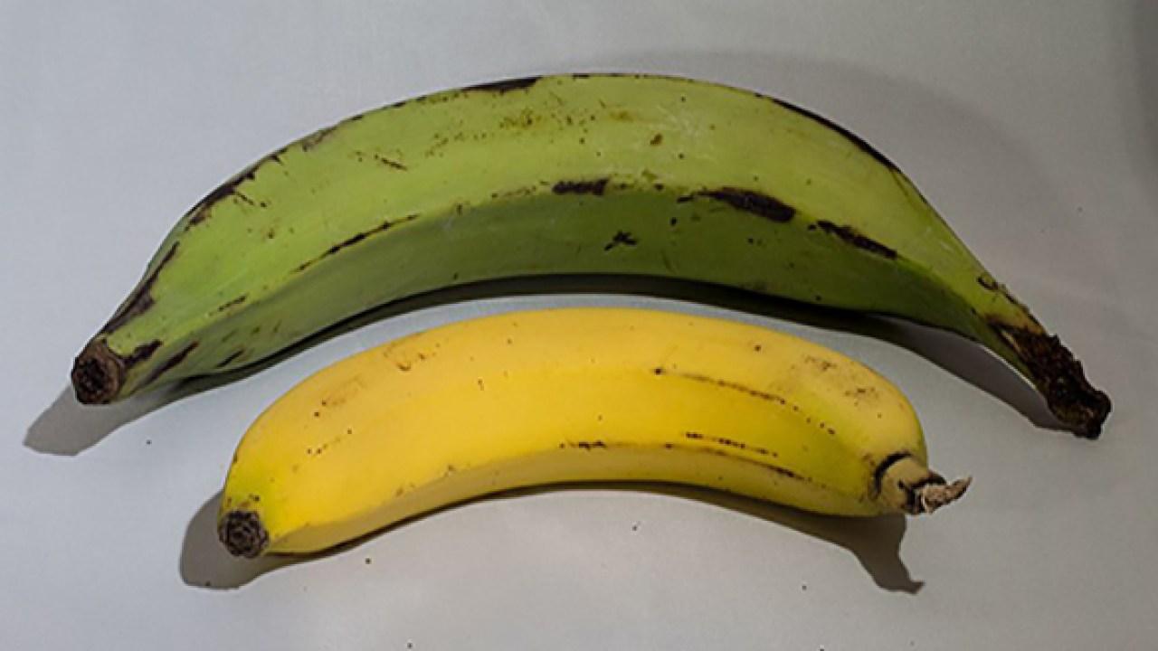 mi mono ya está comiendo plátanos y diabetes
