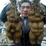 He Shou Wu (Fo Ti), la Raíz Milagrosa Para la Salud y el Pelo