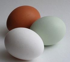 Mitos y Verdades Sobre el Consumo de Huevos
