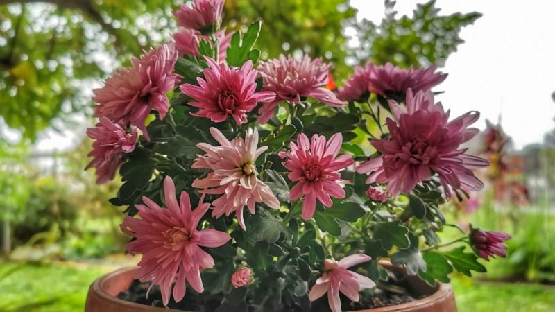 Un pensiero e un fiore per i nostri cari defunti