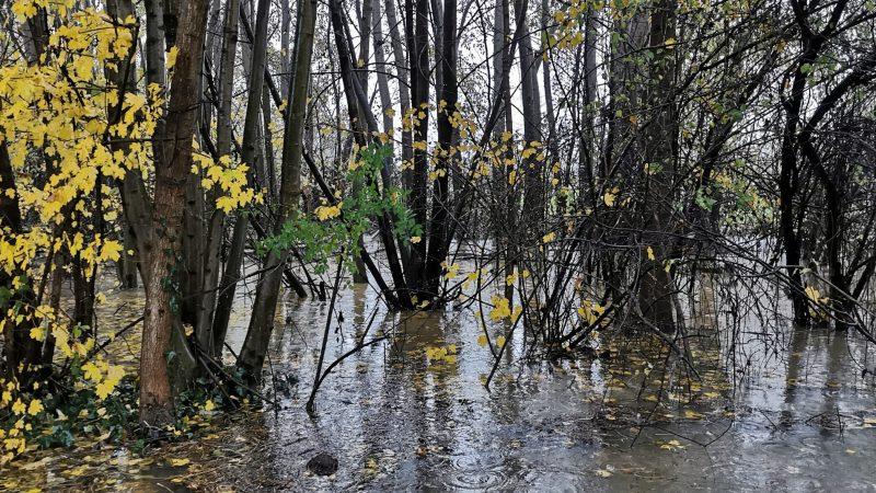 Foto / Sottobosco allagato dalle abbondanti piogge degli ultimi giorni