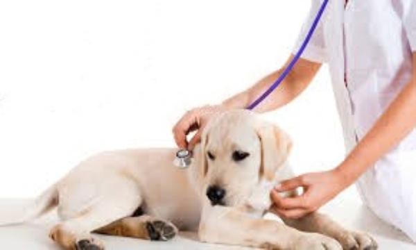 Riapre lo studio veterinario di Via Martiri