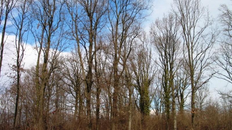 Per il recupero delle terre abbandonate e colonizzate dalla vegetazione