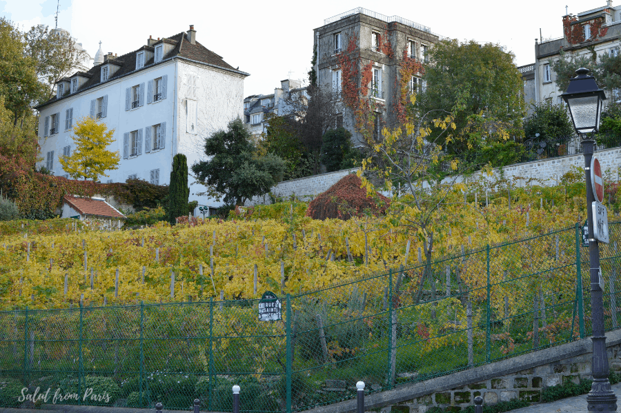 The vine yards of Paris - Pars vine harvest fest in October is one of the most popular events
