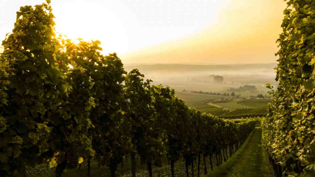 How to visit Bordeaux from Paris in just 1 day!