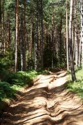 route_clan_sarajevo_2013-071