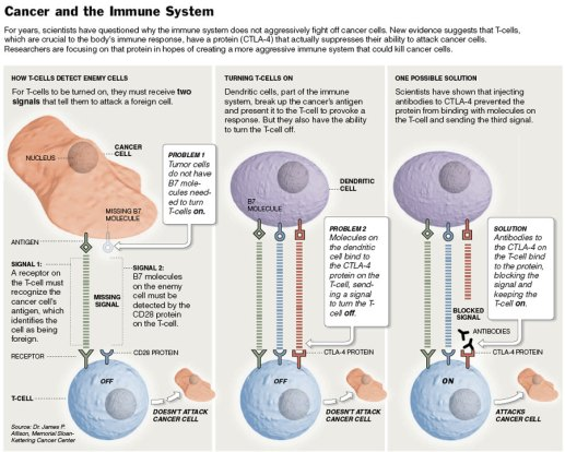 Image result for Chemotherapy spreads cancer cells harmful to your immune system