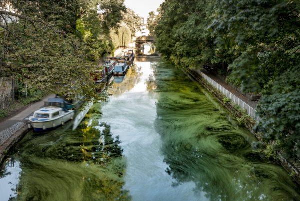 Flow: long exposure test #2