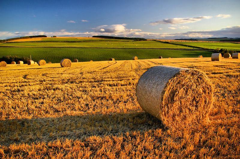 Aiuti comunitari all'agricoltura: sussiste la giurisdizione del g.o.