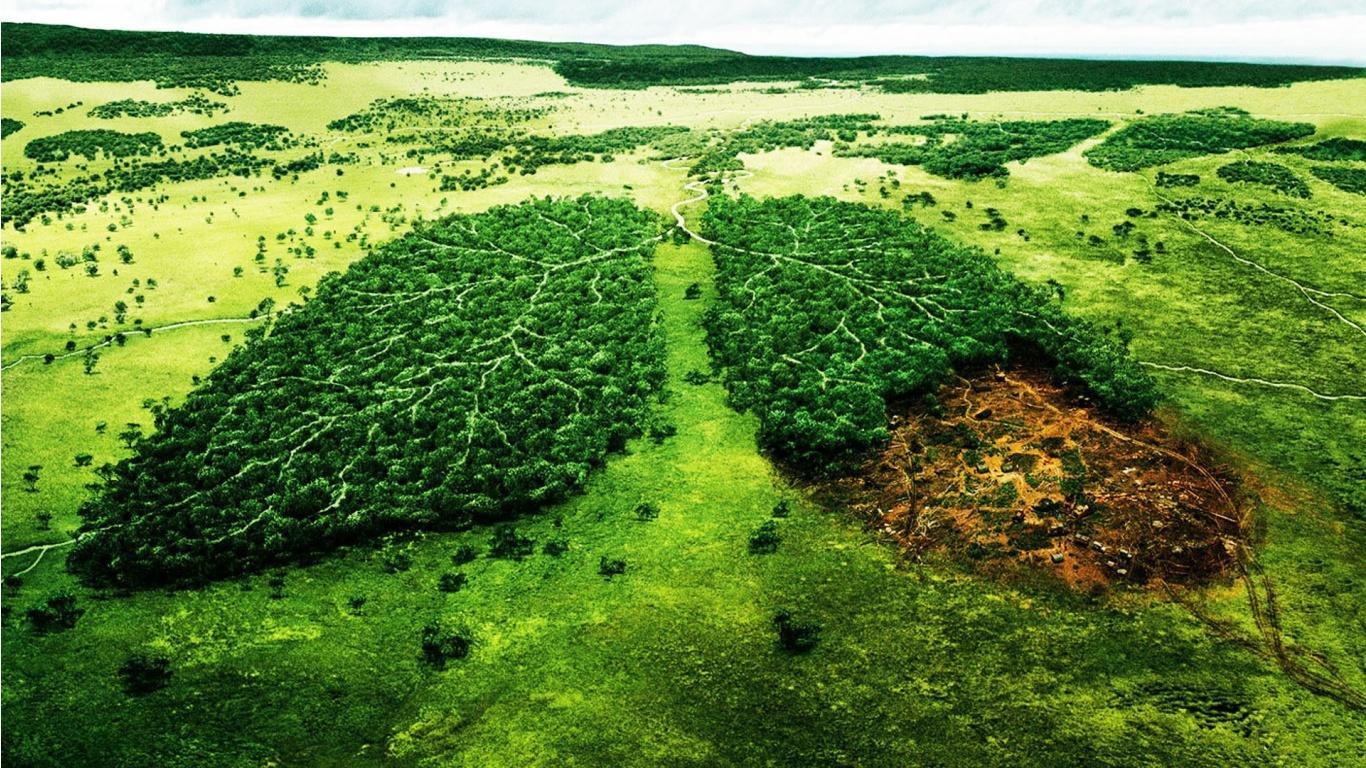 L'ambiente e la public administration in Brasile: economia e diritto a confronto