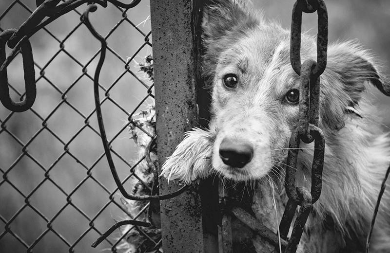 Maltrattamento ed abbandono di animali. Come comportarsi?