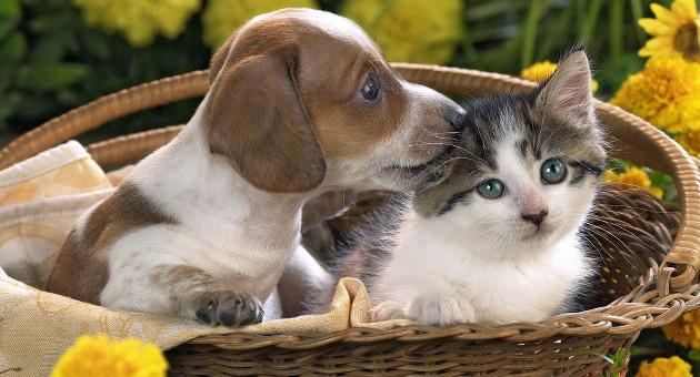 """Se gli animali sono cose, quale tutela per i """"difetti di conformità""""?"""